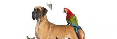 Dog sitter o colf, chi si occupa in casa degli animali domestici?